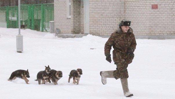 Как щенки становятся защитниками границы — в фотографиях журналиста Василия Федосенко (8 фото)