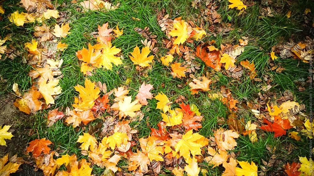 Осень под ногами, золотые листья