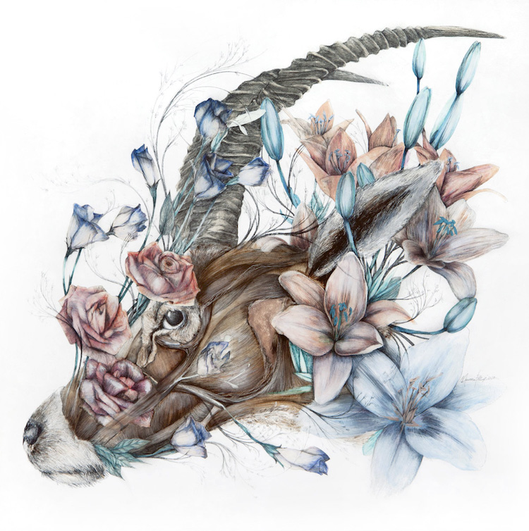 Anatomical Art Combines Animals with the Flora of the Philippines (7 pics)