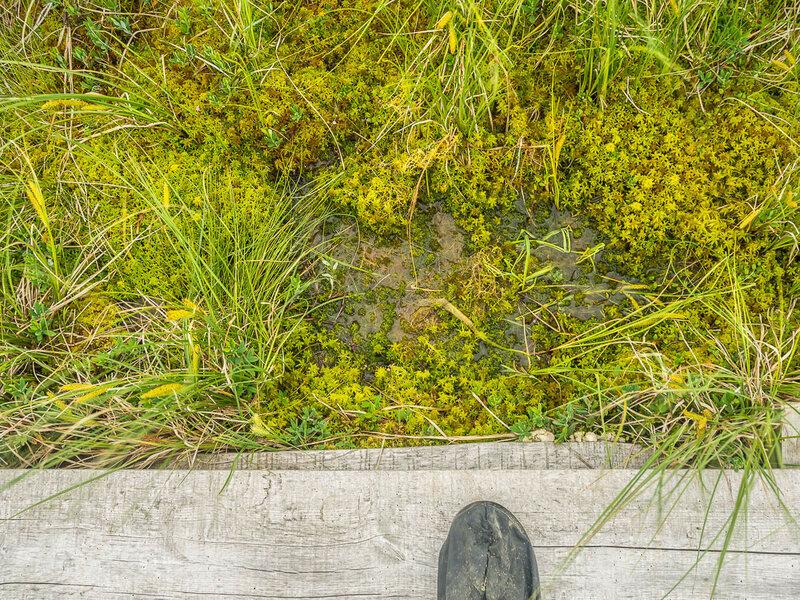 Поверхность кажется твёрдой, но под тонким слоем сфагнума вода.