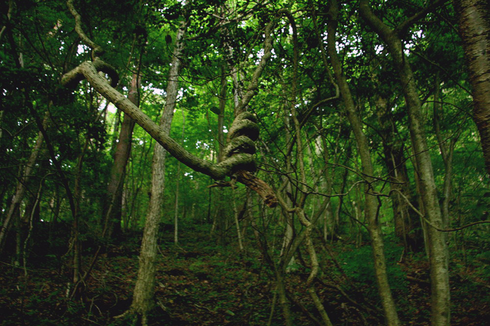 aokigahara-forest-japan_resize.jpg
