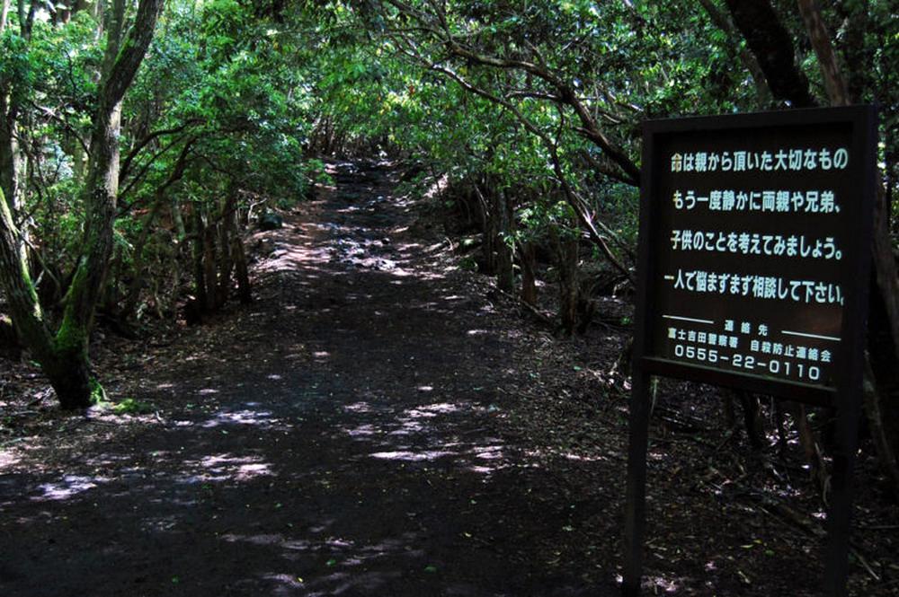Aokigahara-pathway-768x511_resize.jpg