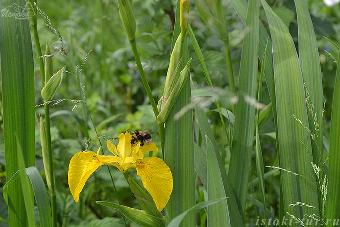 пчела_на_цветке_pchela_na_tsvetke