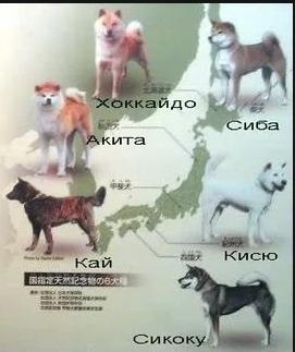 Шесть японских пород собак.jpg