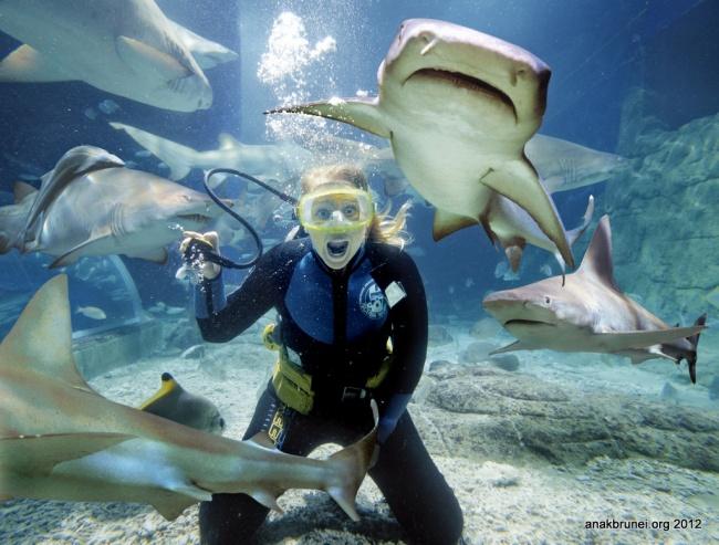 © Image by Reedz Malik used under CC  Для кого: Для тех, кто готов поплавать вместе сзубастым