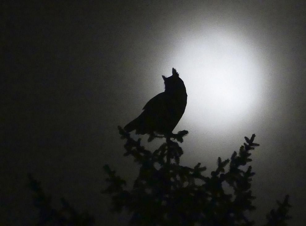 11. Бразильский серфер. (Фото Ted Somerville | National Geographic Travel Photographer of the Y