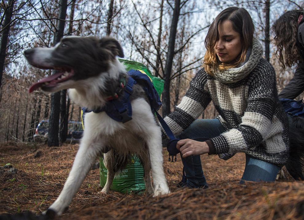 6. А дальше собак просто отпускают бегать по лесу.