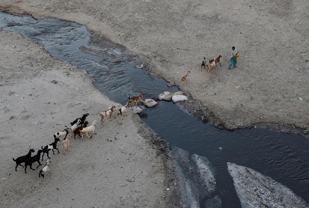 14. Еще один сброс нечистот. Сточные воды вытекают в реку Ганг в Канпуре. (Фото Danish Siddiqui