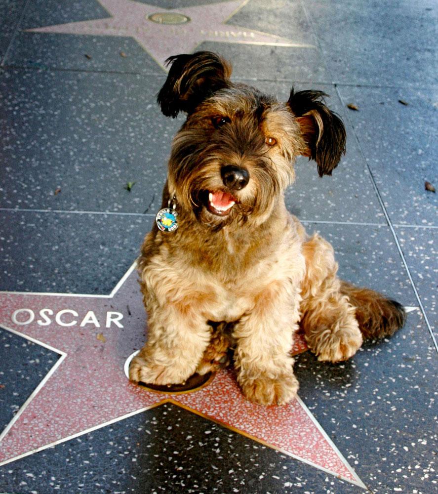 Питомник для бездомных собак посетила журналистка Джоан Лефсон и забрала его домой.