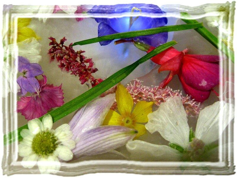 цветы во льду