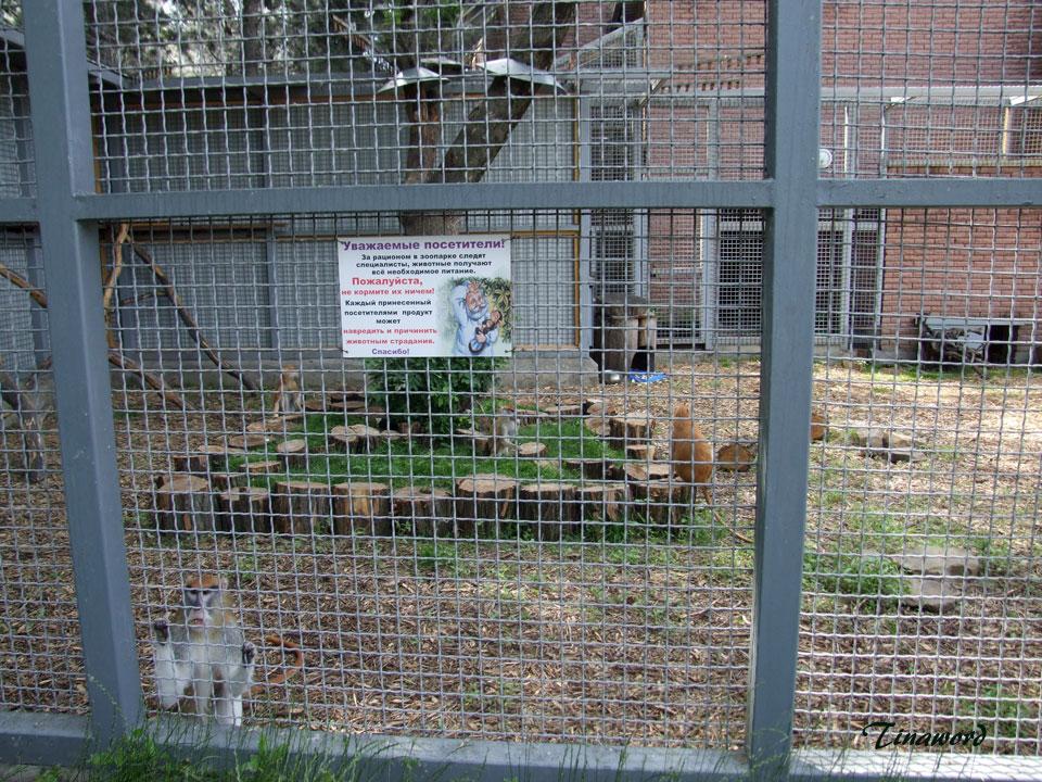 зоопарк-015.jpg