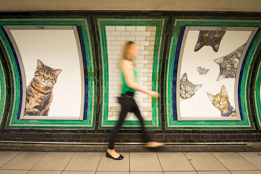 Adverts in London Subway Replaced by Cat Pictures