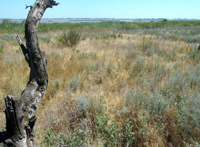 На дереве, перспектива Ахтарского лимана ... DSCN3729.JPG