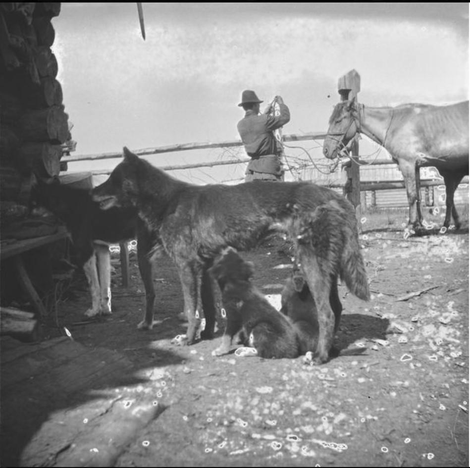 Собаки шамана