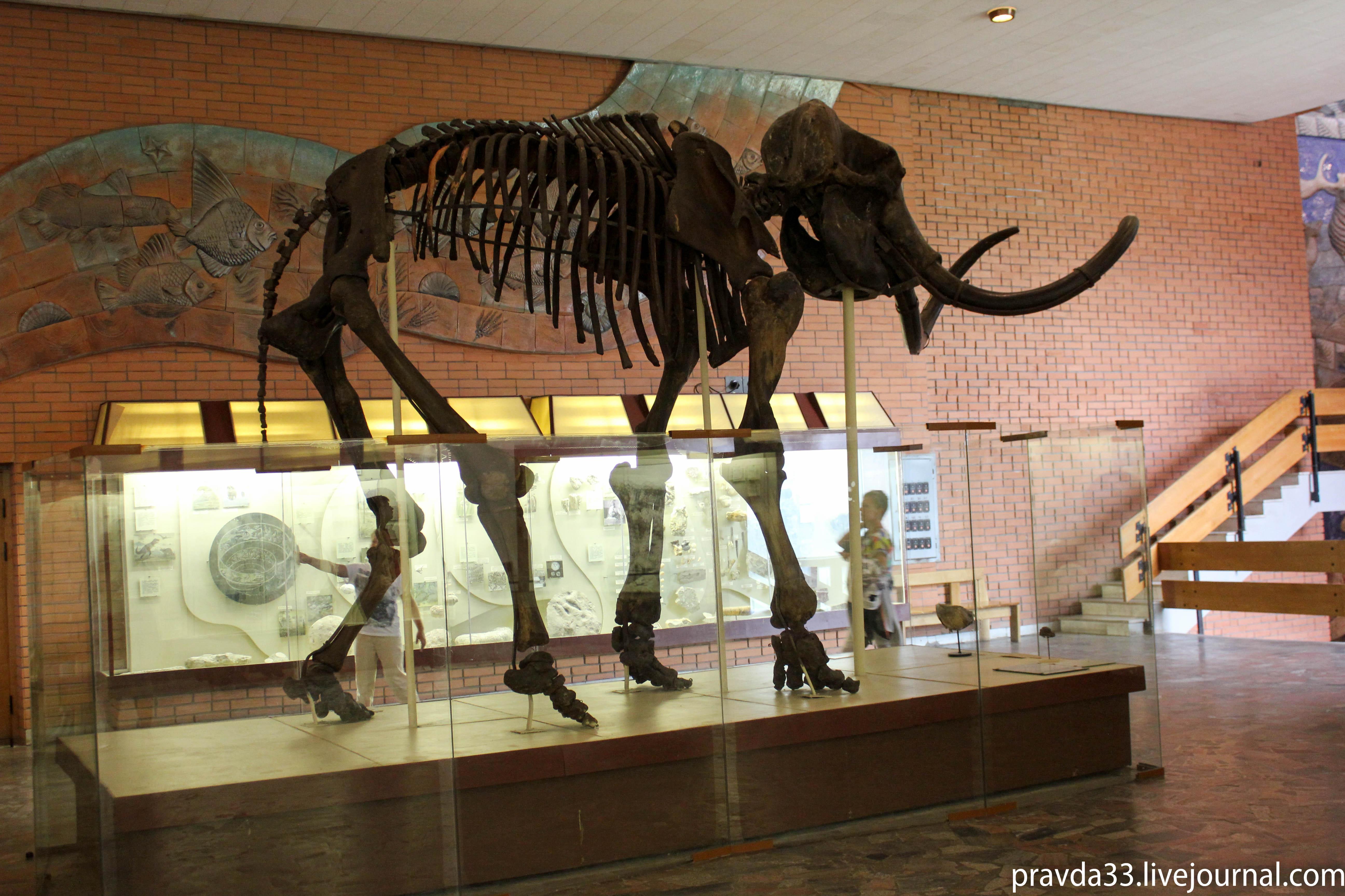 Музей палеонтологии-9.jpg