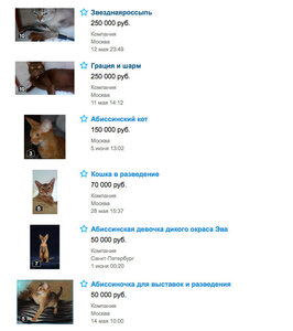 Цены на абиссинскую кошку