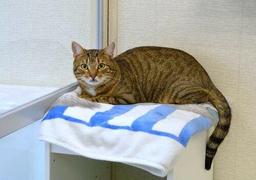Тристан кошка из приюта догпорт