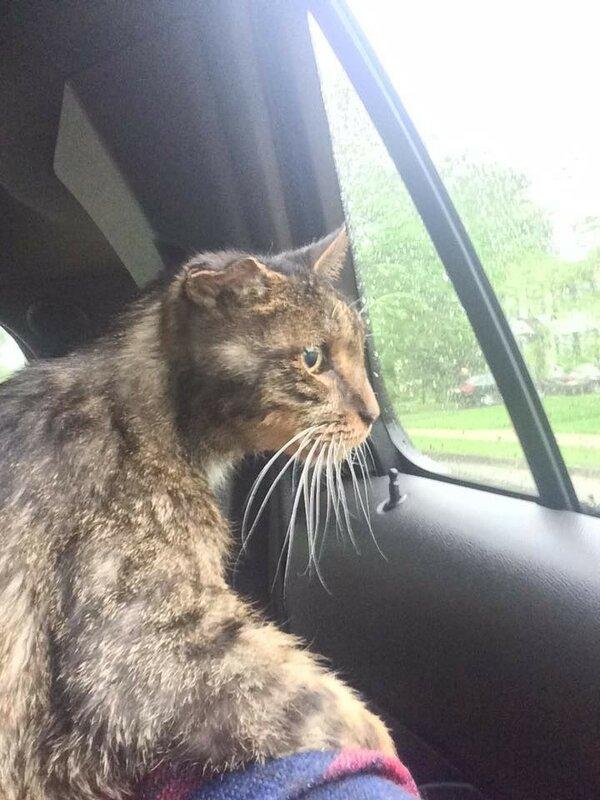 15-летний одноухий бродячий кот