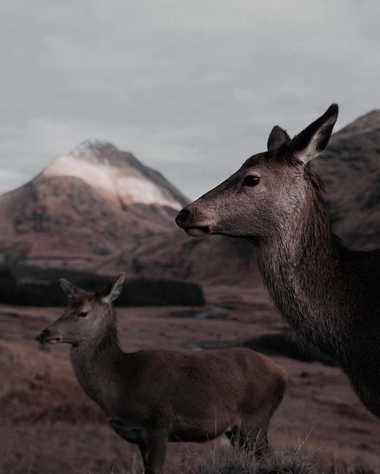 Удивительная близость с природой: дикие животные Шотландии с очень близкого расстояния