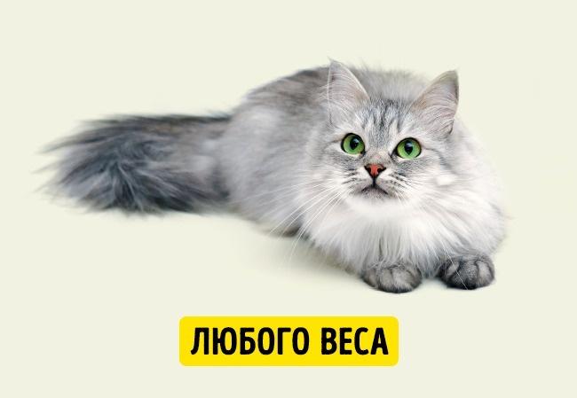 © depositphotos.com  Около двадцати лет назад средняя продолжительность кошачьей жизни была не