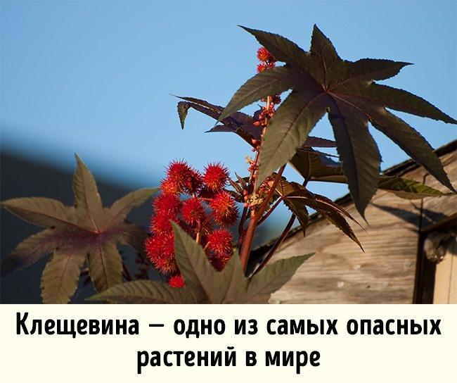 © Derek A Young/flickr  Экзотические растения могут причинить неменьший вред, чем животные. П