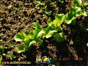 салат начала июня