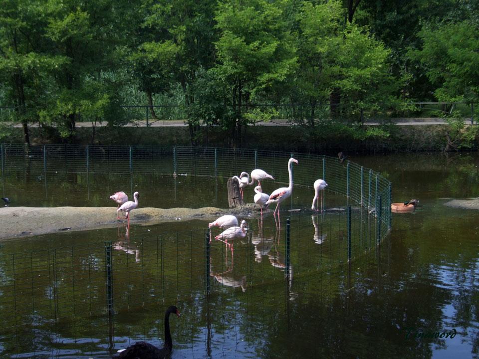 зоопарк-94.jpg