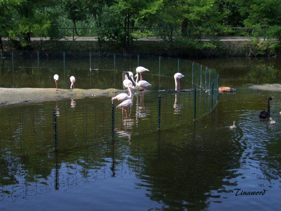 зоопарк-97.jpg