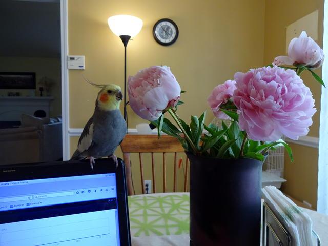 ptice.jpg
