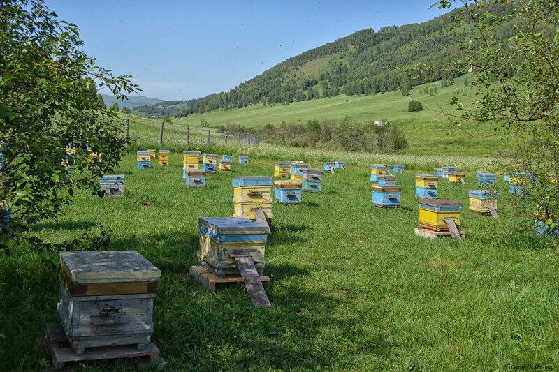 Пчелиный город