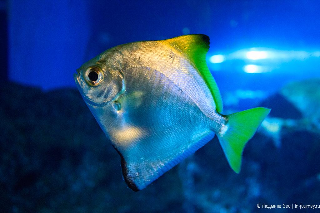 рыбы в океанариуме siam ocean world
