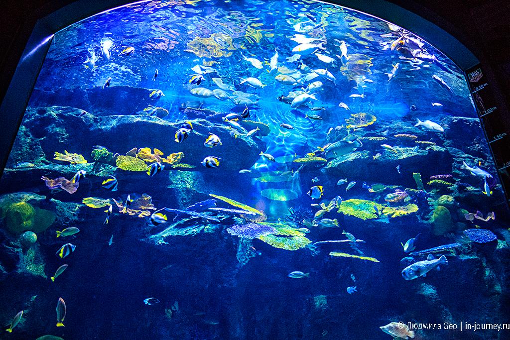 сиам парагон океанариум
