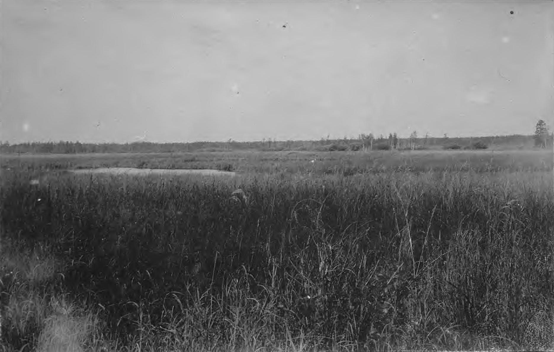 Пойма реки Томь