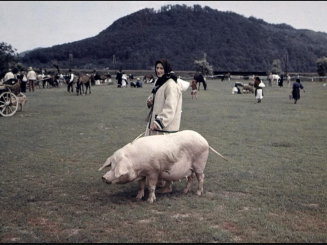 Женщина с свиньёй на рынке