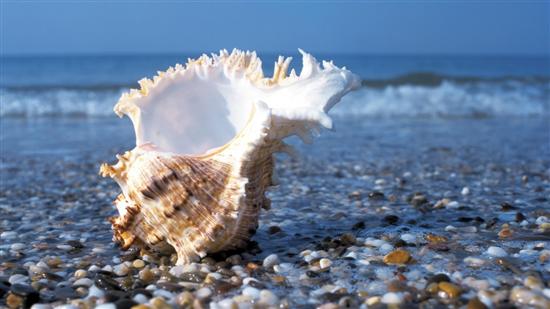 Море. Открытки. Всемирный день моря