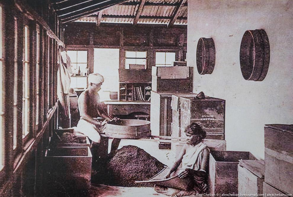 11. Прошло 150 лет... А процесс выглядит точно также! Чайные листочки попадают в машину для с