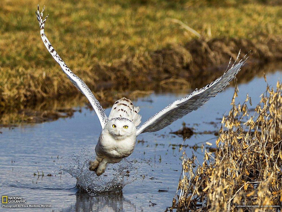 Белый аллигатор    Можно рассмотреть поподробнее  (1800×15