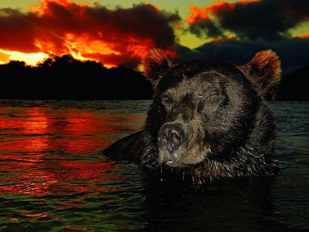 «Молчаливая эволюция»    Долгие годы не появлявшийся в водах Канкуна се