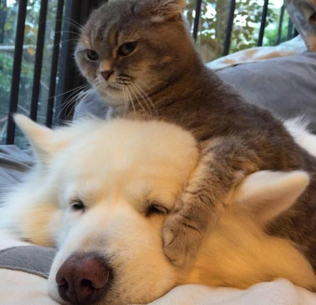 © reddit.com      Мне кажется, что мой кот насамом деле маленький человек вкостю