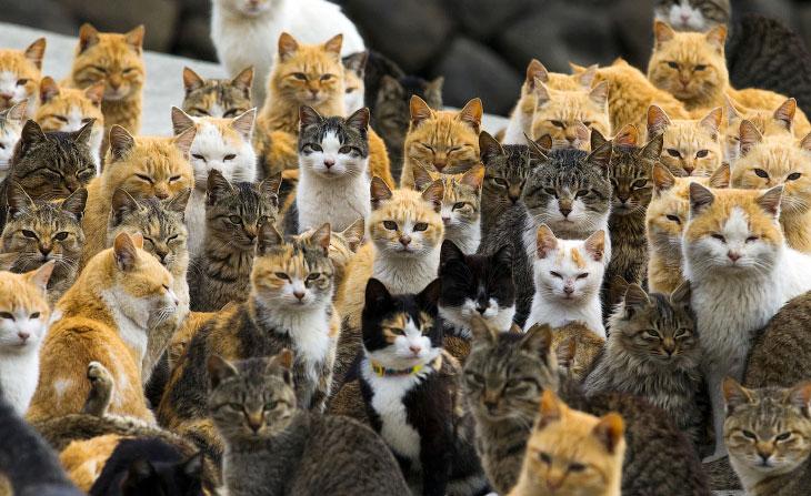 Остров кошек Аошима (25 фото)