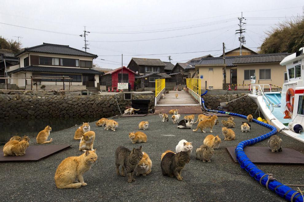 6. С остальной Японией остров соединяет паромная переправа. Здесь нет гостиниц и больших мага