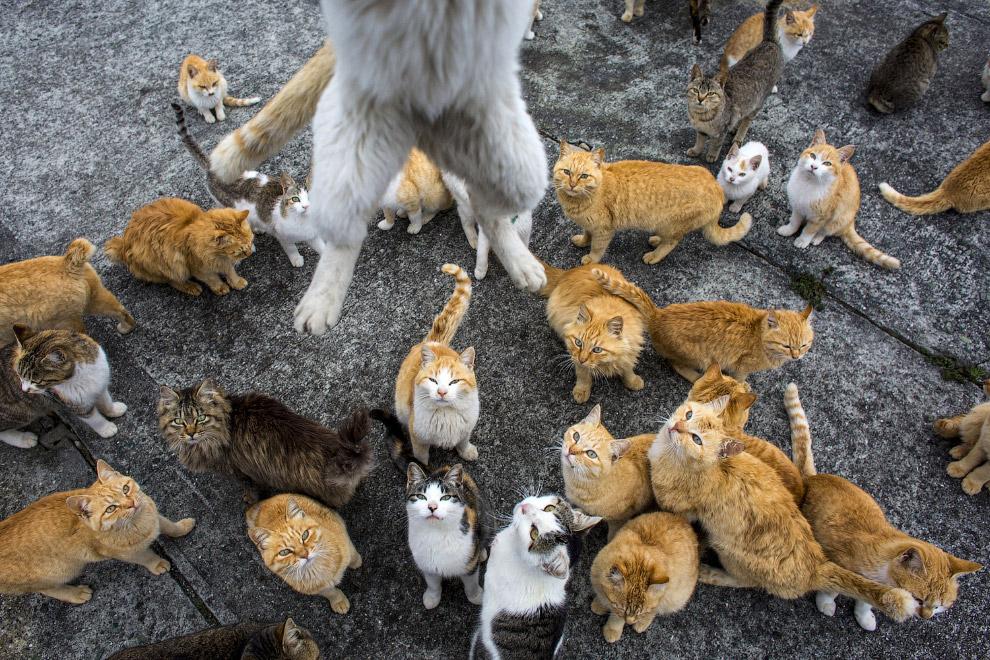 15. Драка за кусок. Остров кошек Аошима, 25 февраля 2015. (Фото Thomas Peter | Reuters):