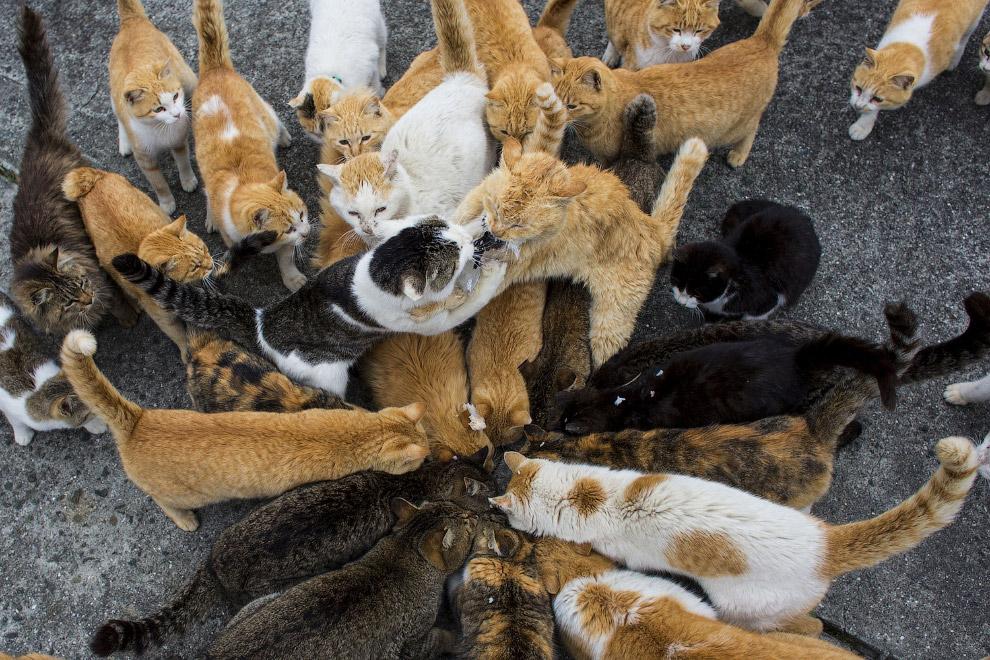 16. Кот в заброшенной школе на острове Аошима, 25 февраля 2015. (Фото Thomas Peter | Reuters)