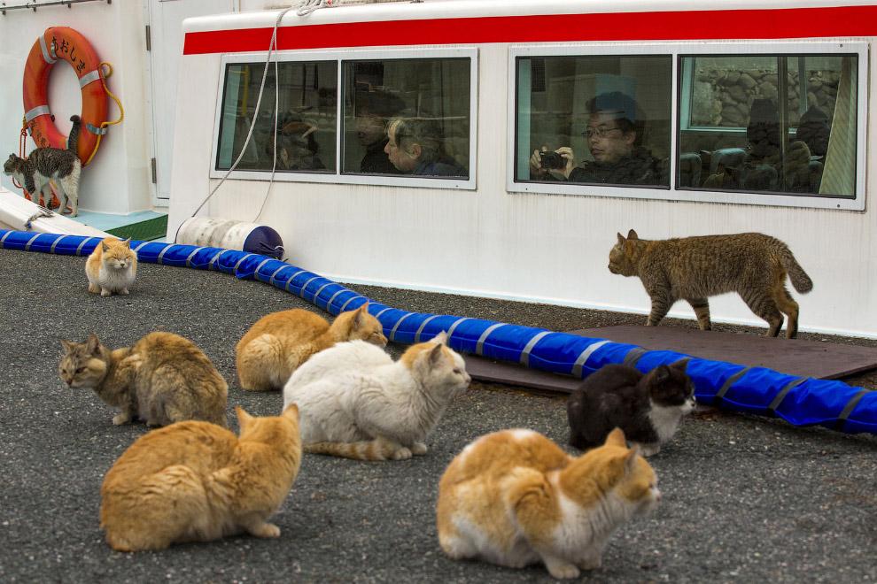 23. Кошки и местные жители с нами прощаются. (Фото Thomas Peter | Reuters):