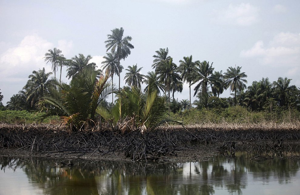 Уничтоженные мангровые заросли из-за разлива нефти. Мангры обладают исключительной способност
