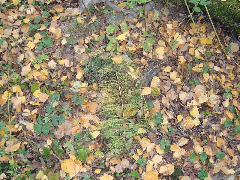 Тушино. Алёшкинский лес (14)