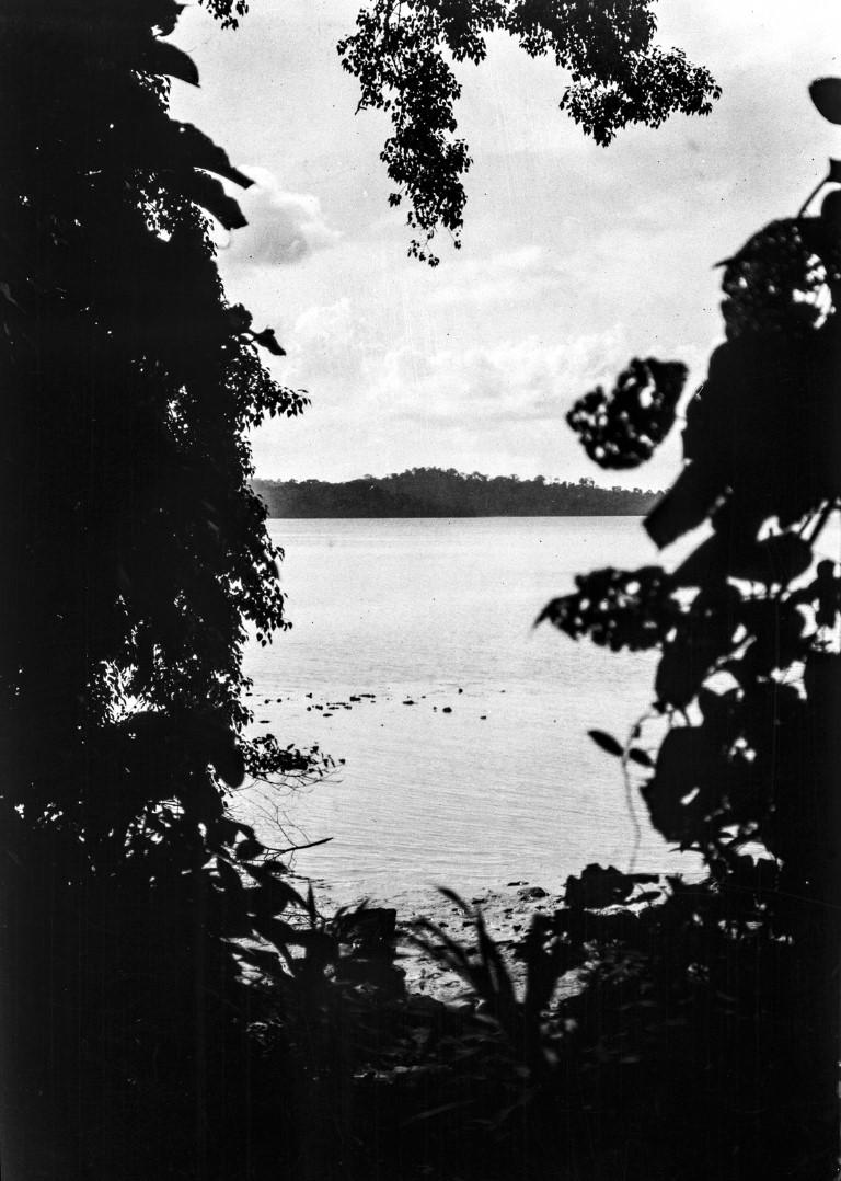 1256. Вид через заросли острова Лонг на соседний остров