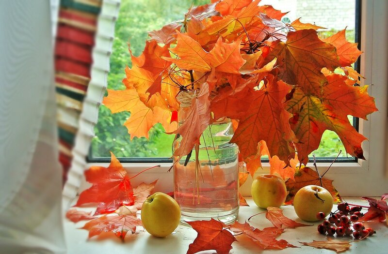 Букет кленовых листьев...