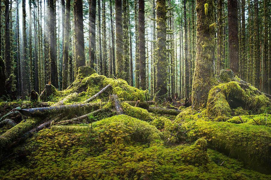hoh-rainforest-log-jam-dan-mihai.jpg