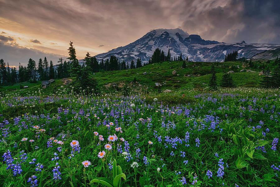 meadows-of-heaven-dan-mihai.jpg